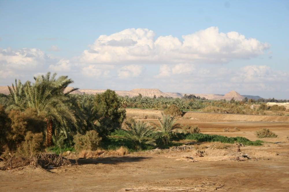 Egypte, 1 au 8 février Bahariya 217 - Copie