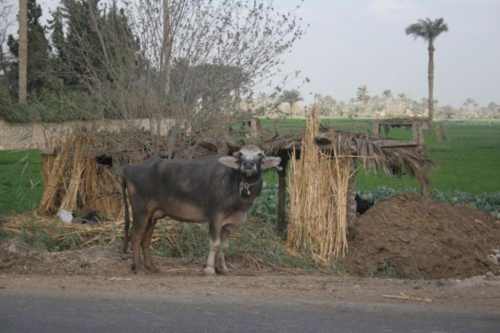 Egypte, 14 au 22 dec 2011, Le Caire 422 - Copie