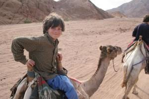 Égypte, 02 au 03 jan 2011, Dahab-Chameau 204petite