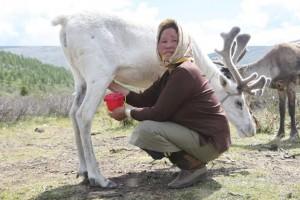 584797-eleveurs-rennes-vivent-clans-montagnes