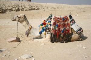 Egypte, 14 au 22 dec 2011, Le Caire 475