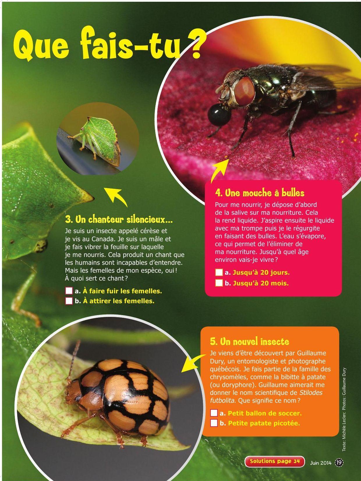 Insectes_2_EXP06_19.pdf-1